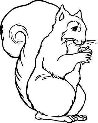 Ardilla comiendo para colorear ~ 4 Dibujo