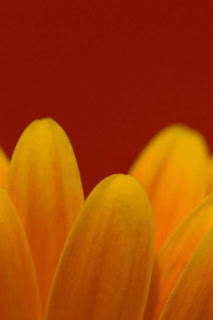Flower Leaf Wallpaper