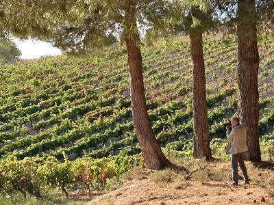 Esteban Capdevila en los viñedos de Bodegas Comenge en Ribera del Duero