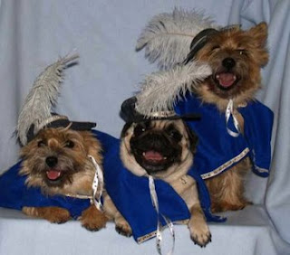 Funny Animals Dressed up