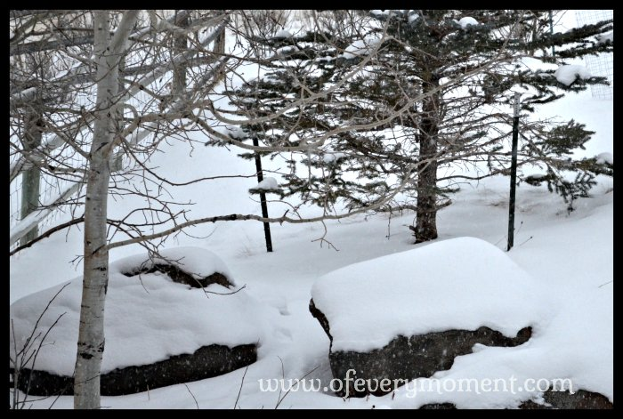 snow on rocks and trees in Montana.