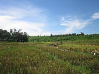 tanah magelang dijual
