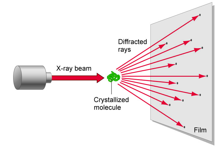 x ray crystallography Using the three-dimensional structure of biological macromolecules to infer how they function is one of the most important fields of modern biology the availability of atomic resolution structures provides a deep and unique understanding of protein function, and helps to unravel the inner workings.