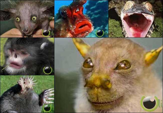10 Hewan dengan bentuk Muka Aneh sekaligus Menakutkan