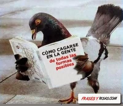 imagene de paloma