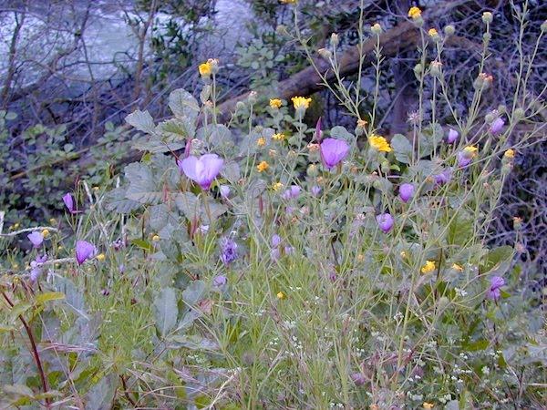 The foothills of Millcreek Canyon, Utah
