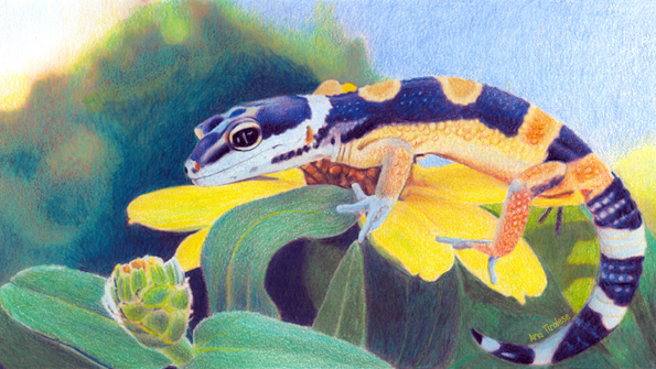 Kiiro the Gecko - 10.5 x 6 - Coloured Pencil on Paper rendered by Ana Tirolese ©2012  (Original photo source Sally Ford of Colored Pencil Magazine, used with permission)