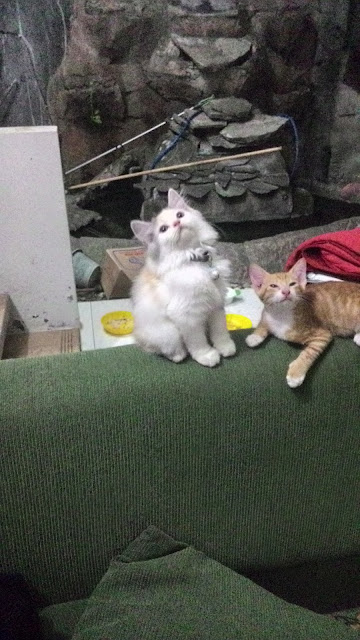 foto-kucing-imut_09