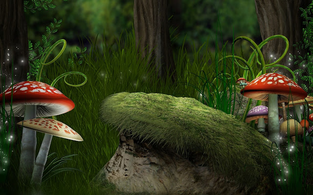 Hermosas Imágenes de Setas Hongos con Forma de Sombrero