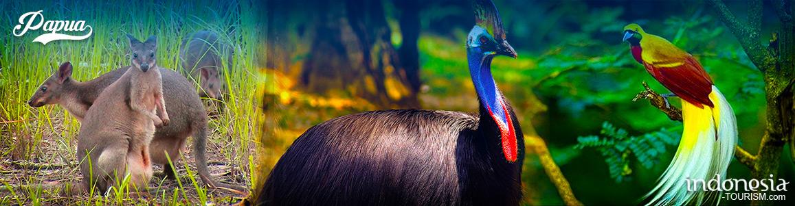 Hewan Alam Papua