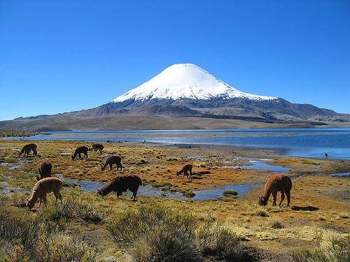 Bienvenidos a Chile Lauca