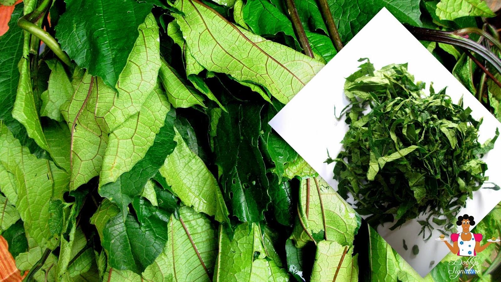 info wellness benefits of ugwu vegetable(fluted pumpkin