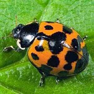 Kebanyakan Lipstik Berisi Kumbang Parasit Hancur