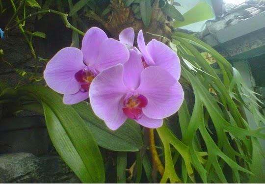 gambar taman bunga indah