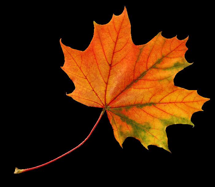 Осенние листья картинки цветные шаблоны для вырезания - f22a