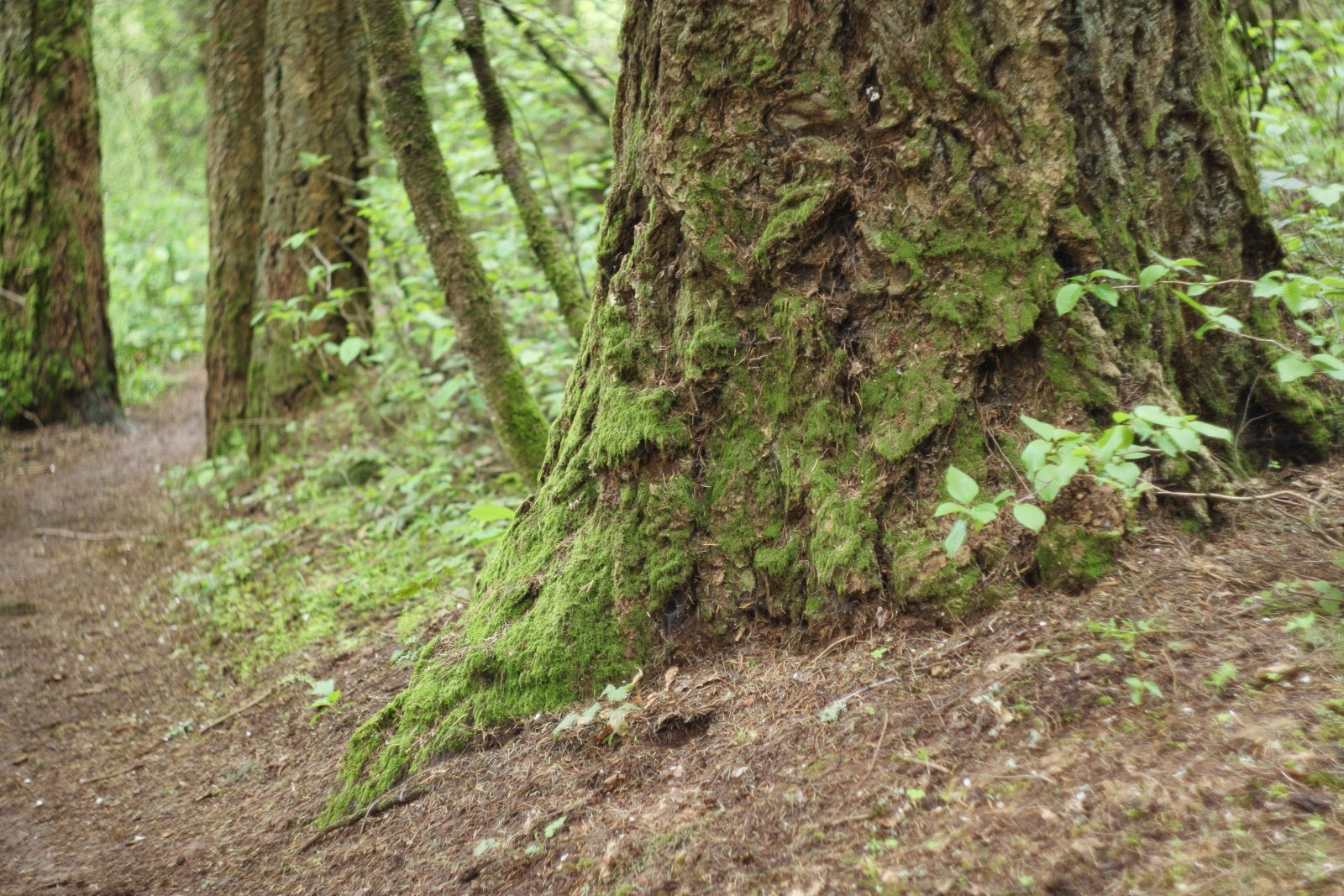 Douglas fir trunk, A Day in the Life, Photo-A-Day April 2015, Day 13, by Lisa Miller