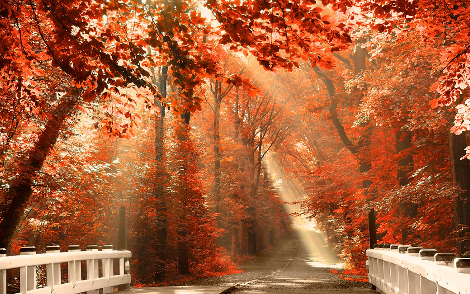Autumn season forest leaves Wallpaper