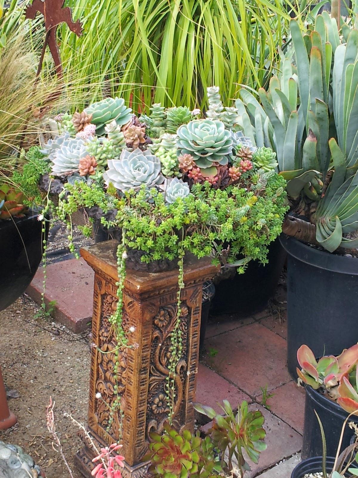 Studio, Garden & Bungalow: It's Cactus Time: California Cactus Center
