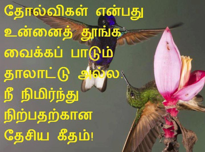 gallery for tamil love failure quotes