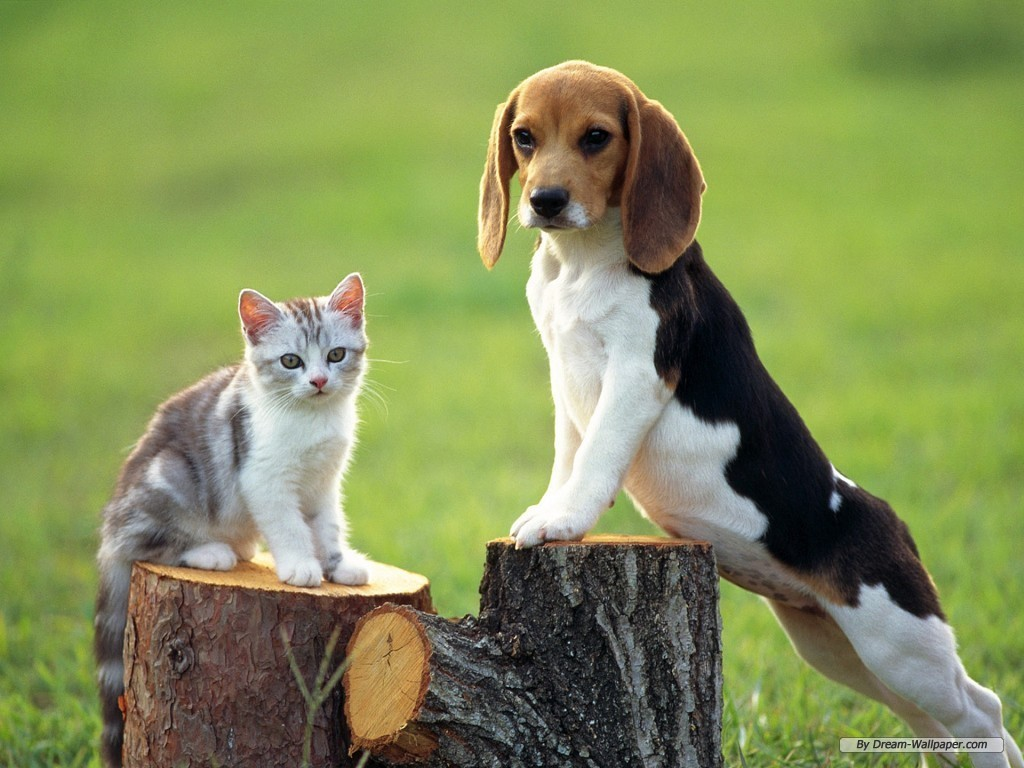 The dog in world: Beagle dogs