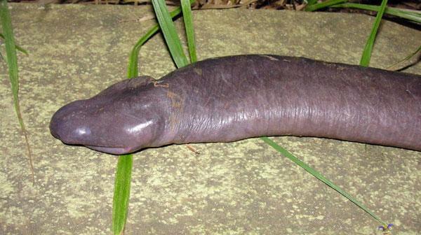 nasty dick pics