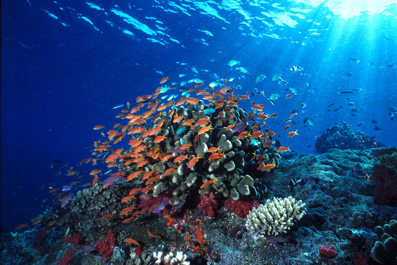 Beautiful Coral Reef Fiji
