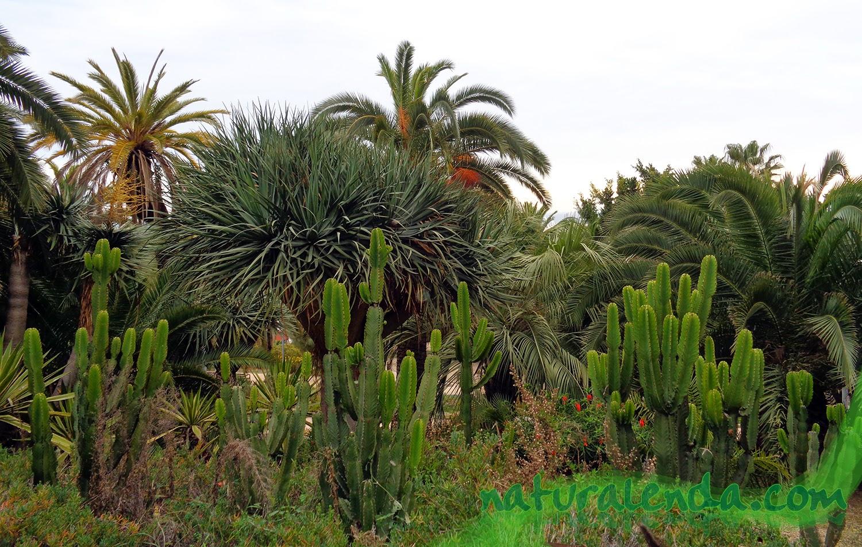 cactus y palmeras