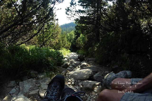 slovakia-bystra-lavka-hike-forest