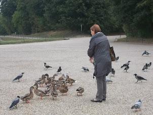 Local Viennese lady feeding wild ducks at Schoenbrunn Palace grounds on Schoenbrunn hill.