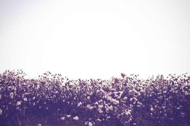 Mallory Berry photography, a style of your own blog, cotton field shoot