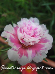 Ros Jepun/Portulaca Grandiflora