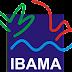 IBAMA abre concurso na área de TI com remuneração de 8,3 mil reais