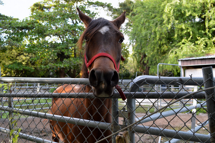 horse model posing
