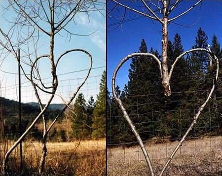 rare tree photo