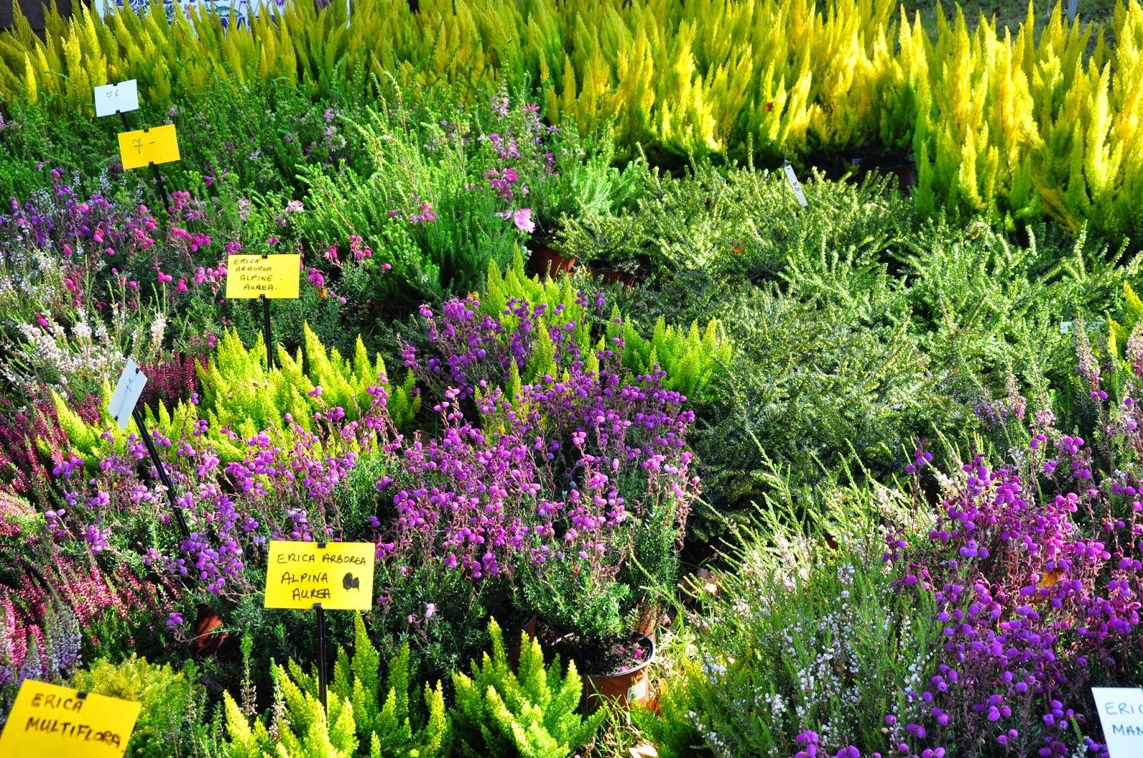 Le jardin du bois joli foire aux plantes au lac d for Jardin aux plantes
