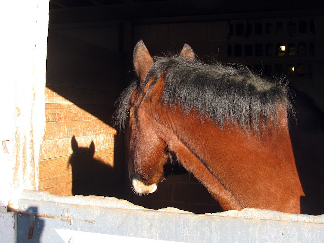 Shy-Horse-at-The-Thomas-School-of-Horsemanship