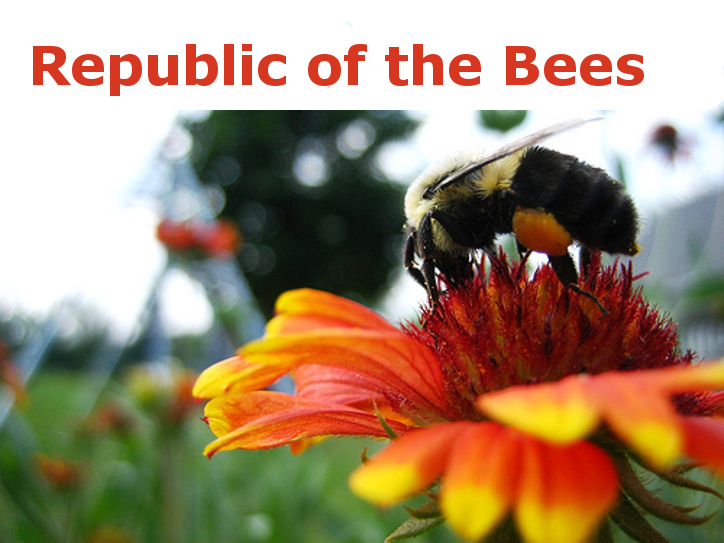 Republic of the Bees