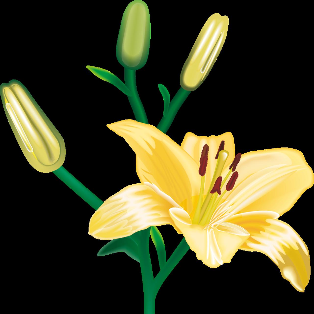 Imagenes De Flores Transparentes - imagenes hermosas que brillen Imagenes Chidas
