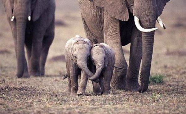 baby-elephants-hug.jpg