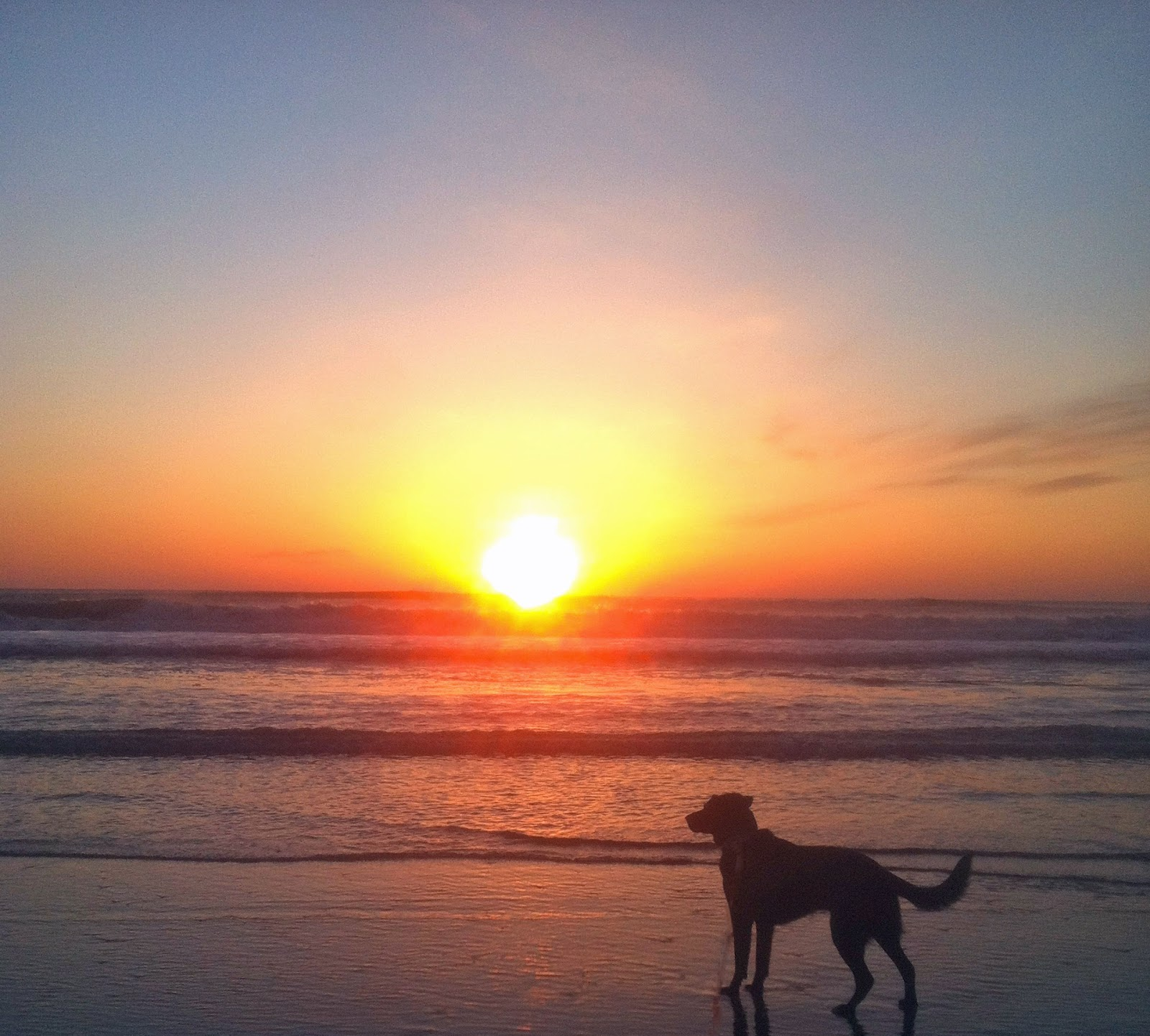 Dog Friendly Outer Banks Vacation Outer Banks Blue S Blog