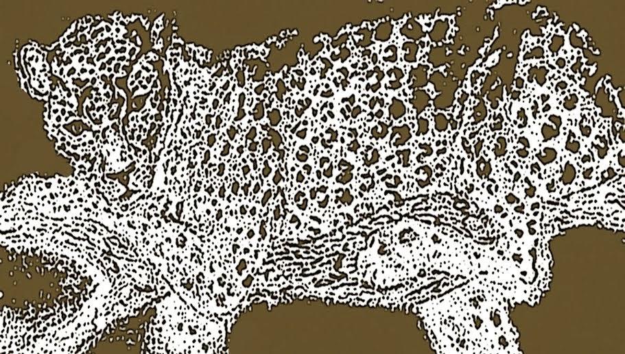 El gato del faro