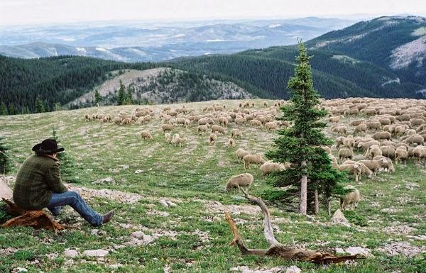 Jake Gyllenhaal in Brokeback Mountain, directed by Ang Lee