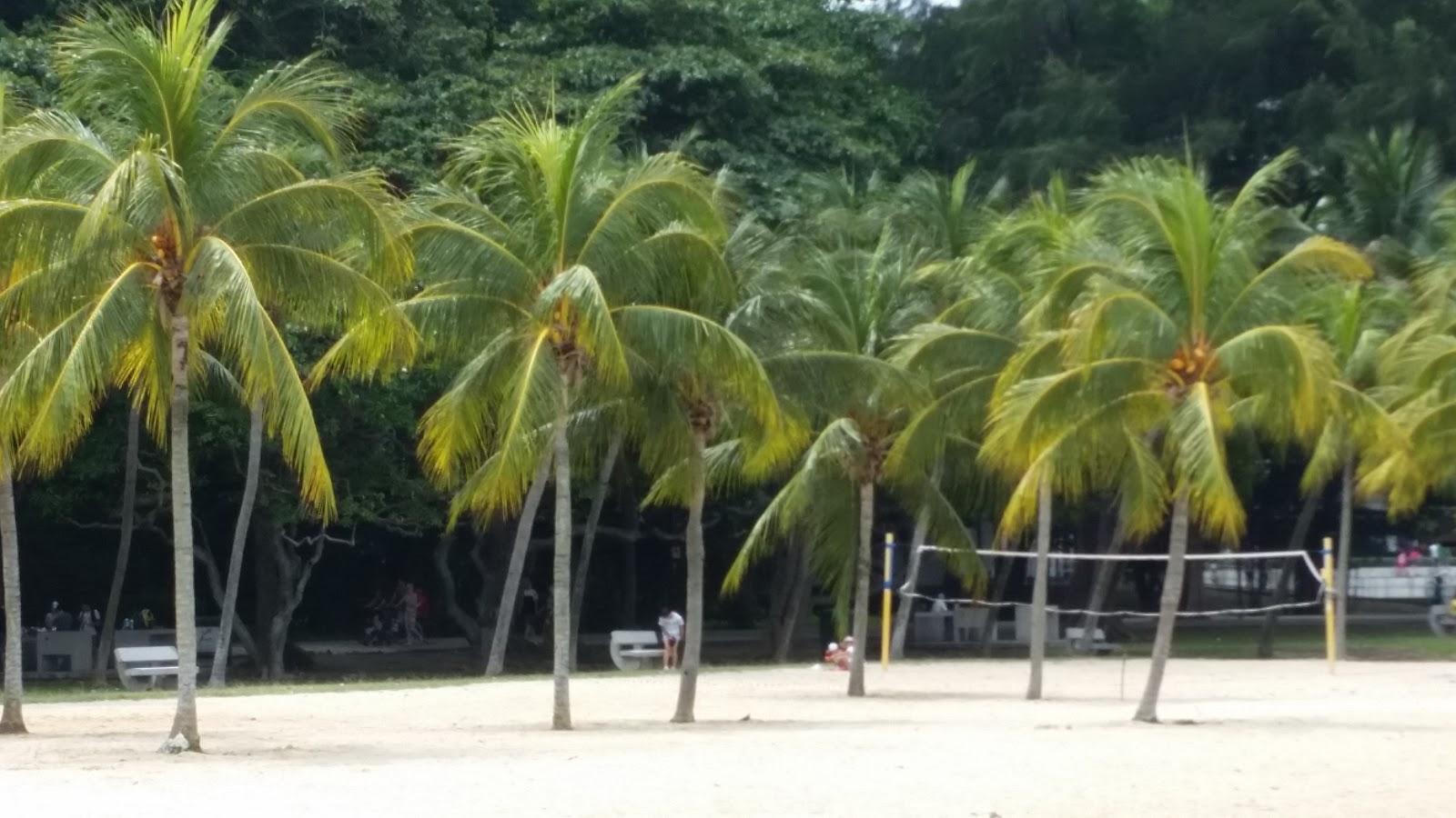Ans frank in singapore middagje strand en de for Visvijver bakken