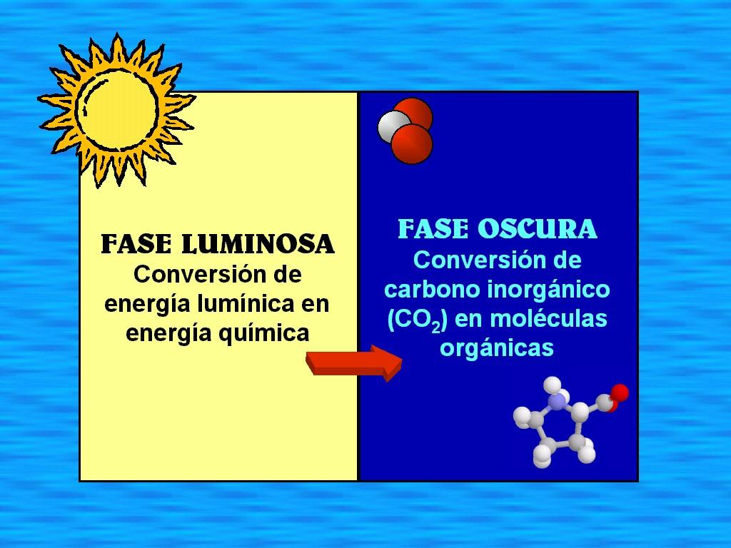 fotosintesis en que consiste: