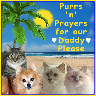 Please keep our Daddy in your purrs and prayers as he recovers from bypass surgery
