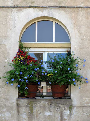 Window with flowers, Livorno