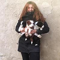 Simila Laiatici Palaia Pisa allevatore addestratore cani Yoga