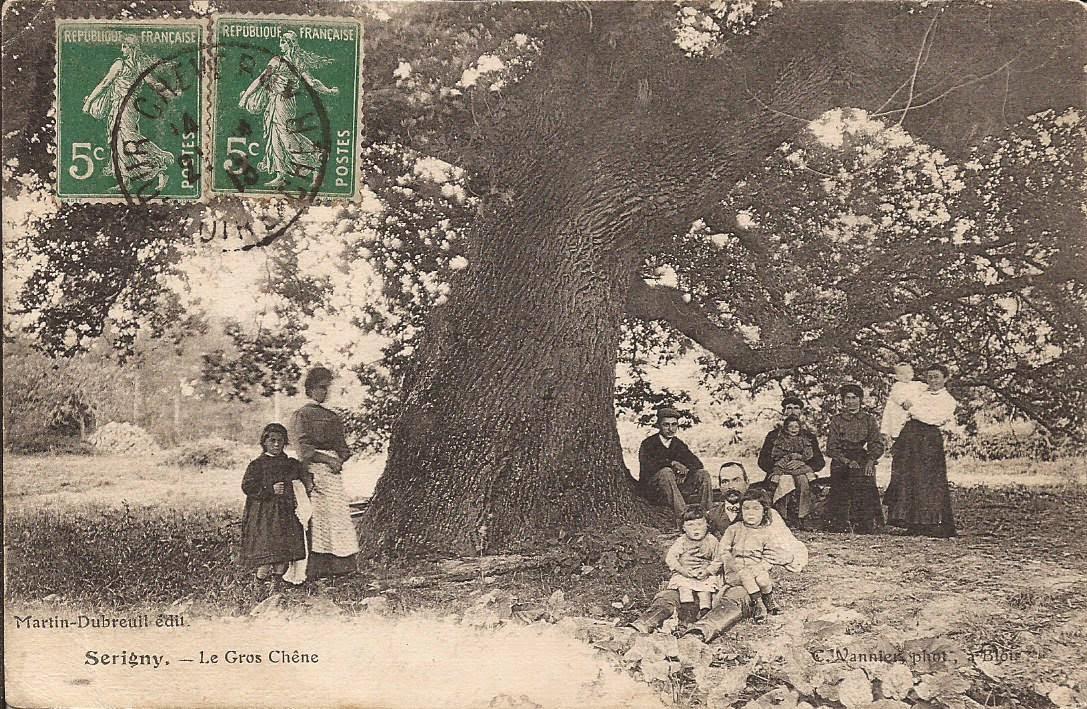 Sérigny - Le Chêne au Rouvre - Cour-Cheverny