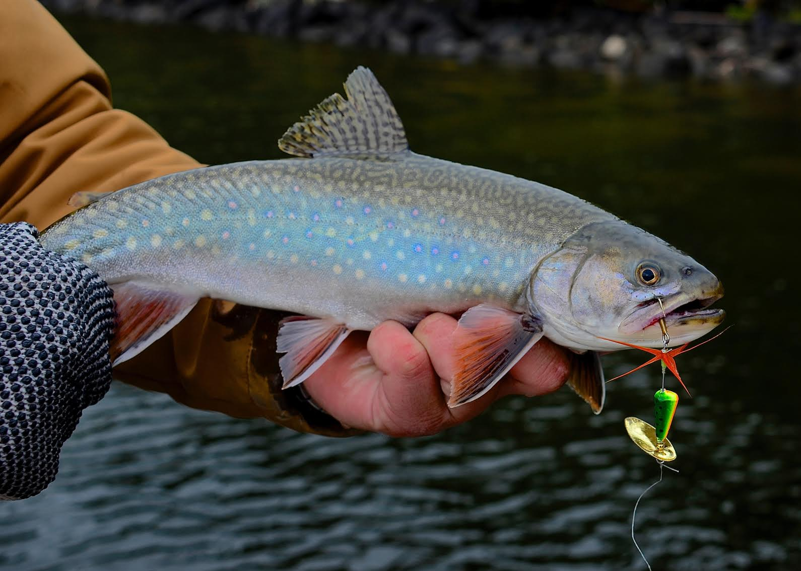 Rooster tail lure for trout for Where to buy fish bait near me