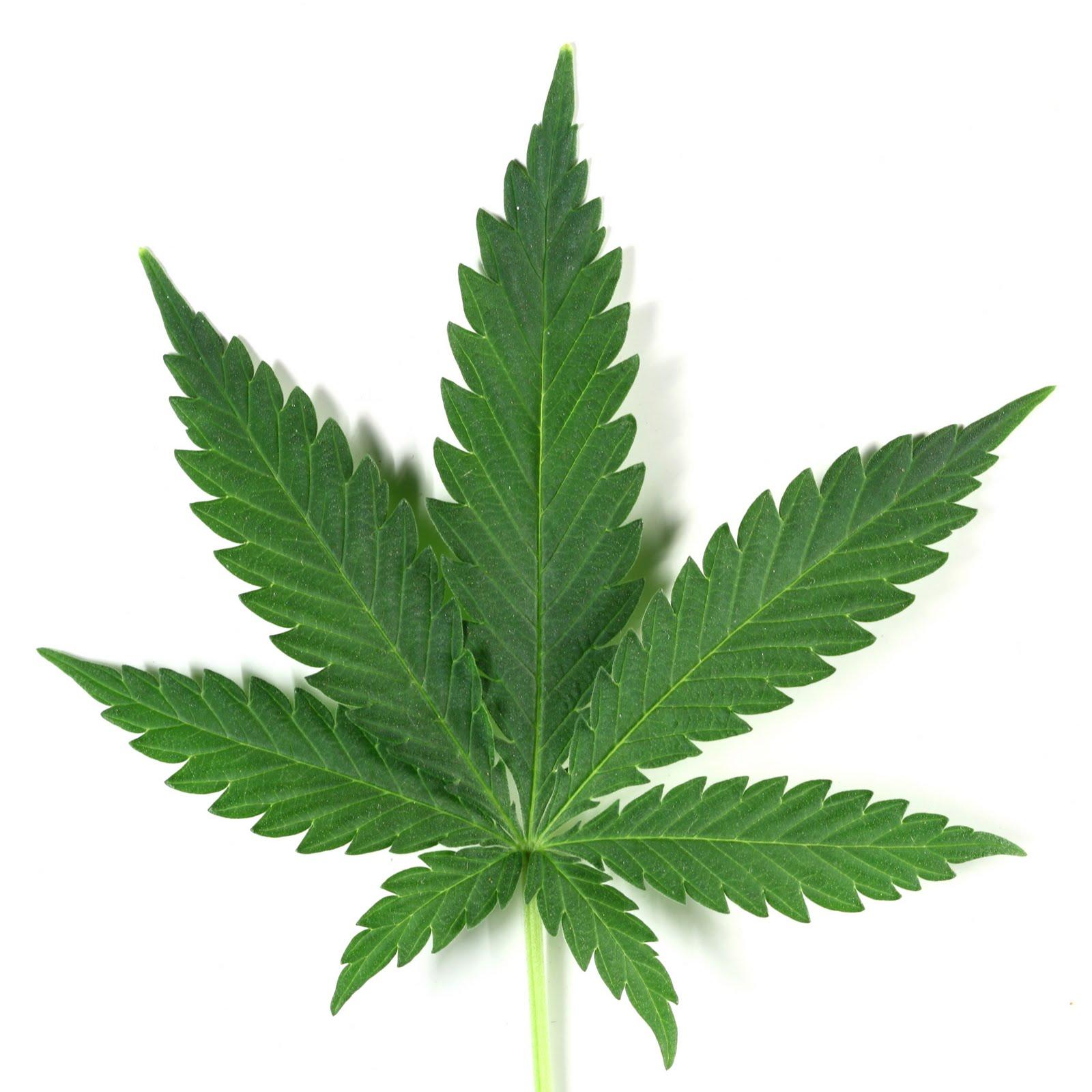 http://4.bp.blogspot.com/-wGncp8-Z7fs/TapsVNzfLjI/AAAAAAAABww/lhoLg_uLYfY/s1600/marijuana-leaf.jpg
